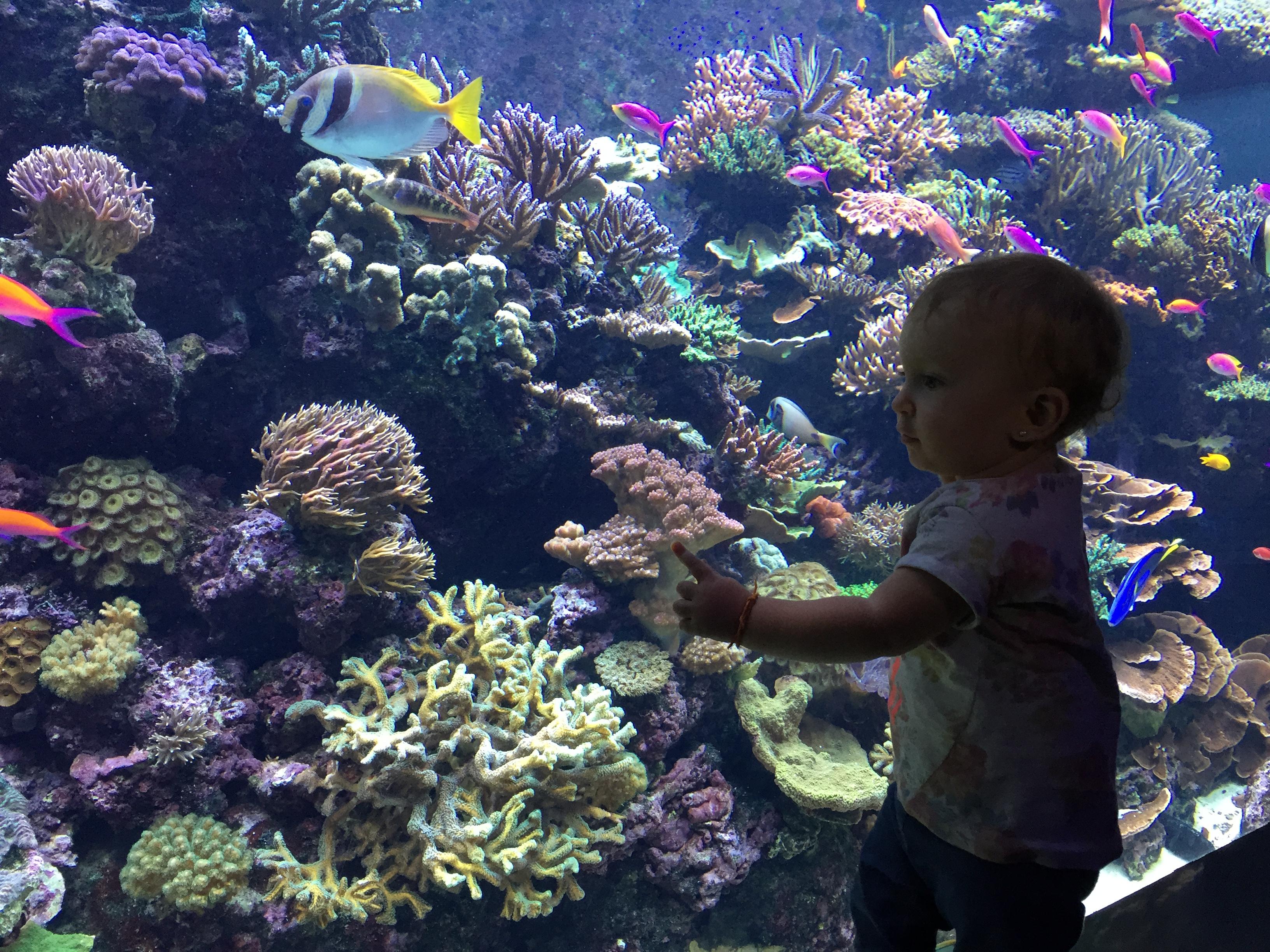 SEO aquarium Santosa Singapura