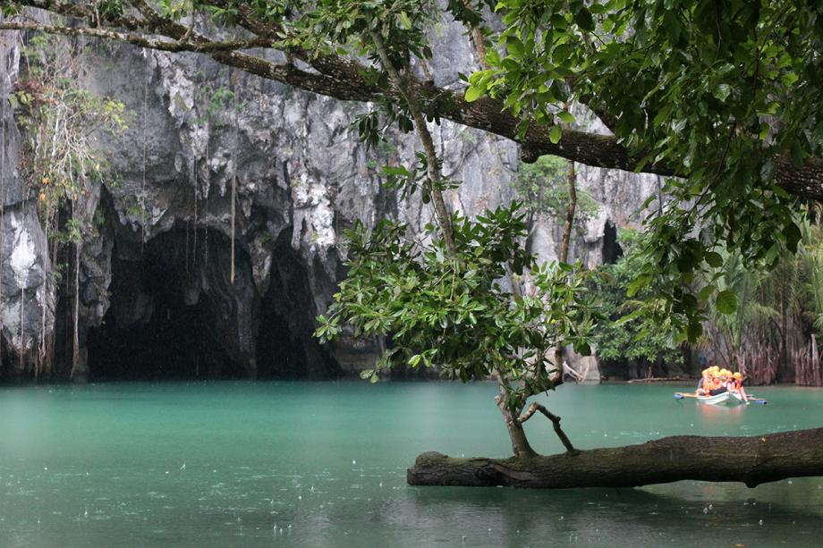 Mangrove Krabi