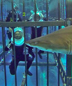 Nadar com tubarões em Dubai
