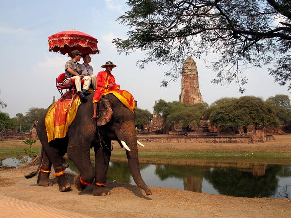 Elefante - Tailandia