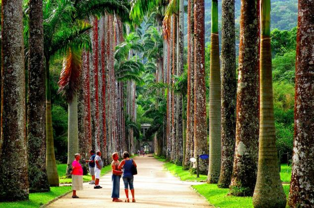 Jardim Botânico Rio Brasil