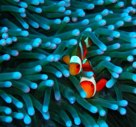 Corais Bali