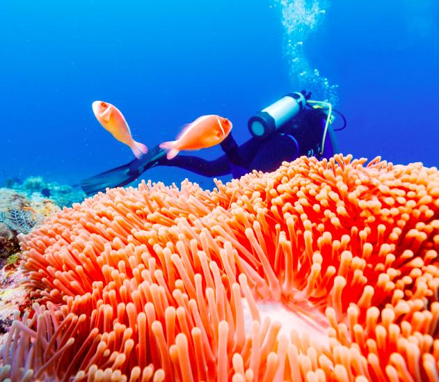 Bali mergulho Reef Coral