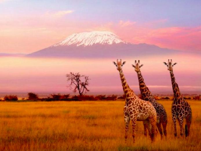Safari Tanzania - Africa