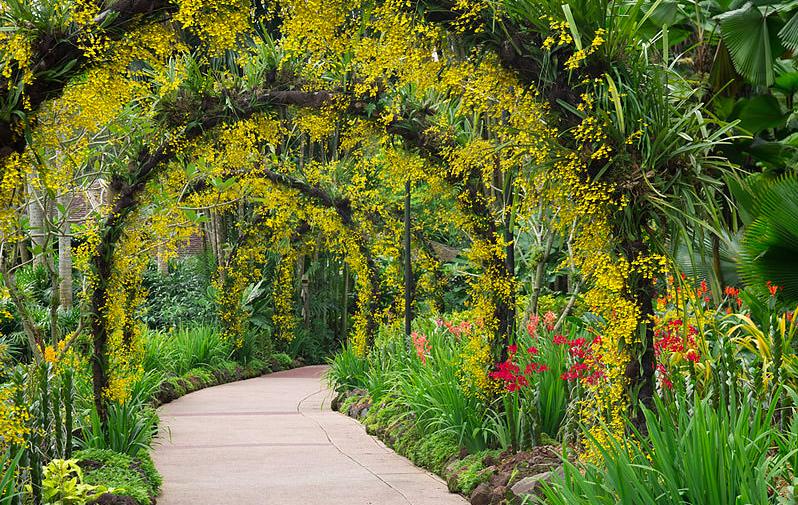 Jardim Botanico Singapura