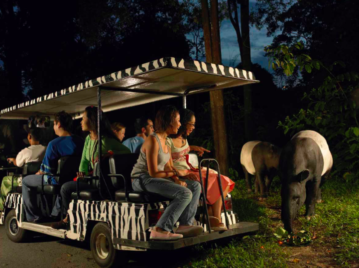 Night Safari Singapura