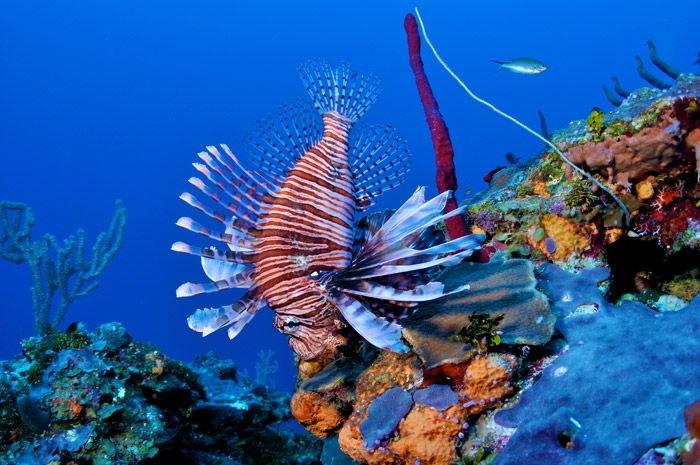 Mergulho Phi Phi Tailandia