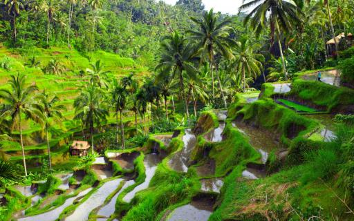 ilha de Bali, Indonésia I a capital de templos e surf