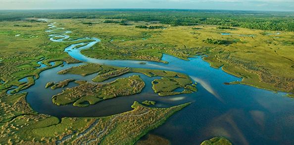 Parque Everglades Park Miami Florida