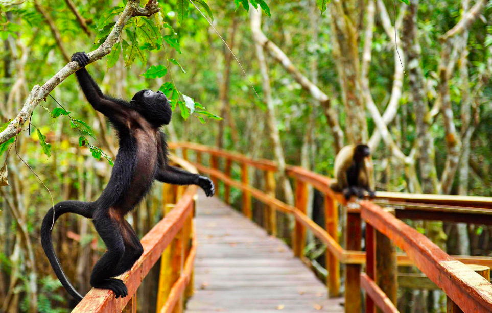 Juma Lodge , hotel Amazonia, hotel selva, amazonie hotel