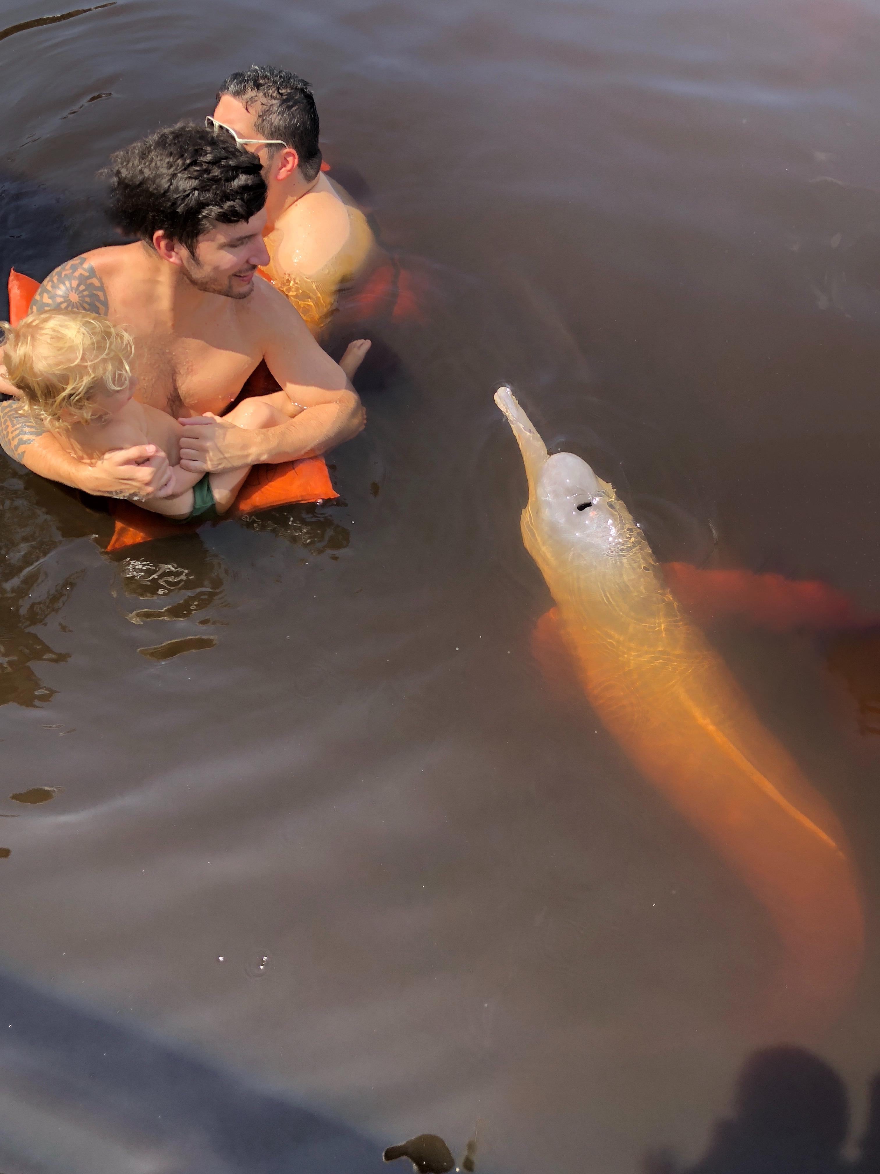 Boto cor de rosa , golfinho rosa , Amazonia , Floresta Amazónica