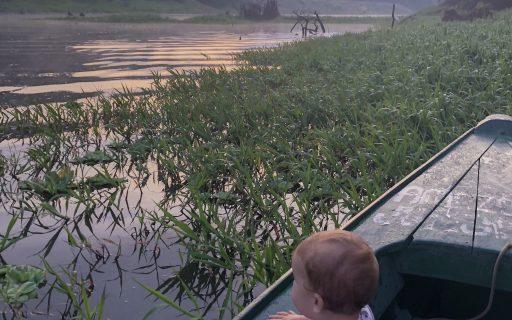Amazonia, guia completo de Manaus e da floresta amazónica