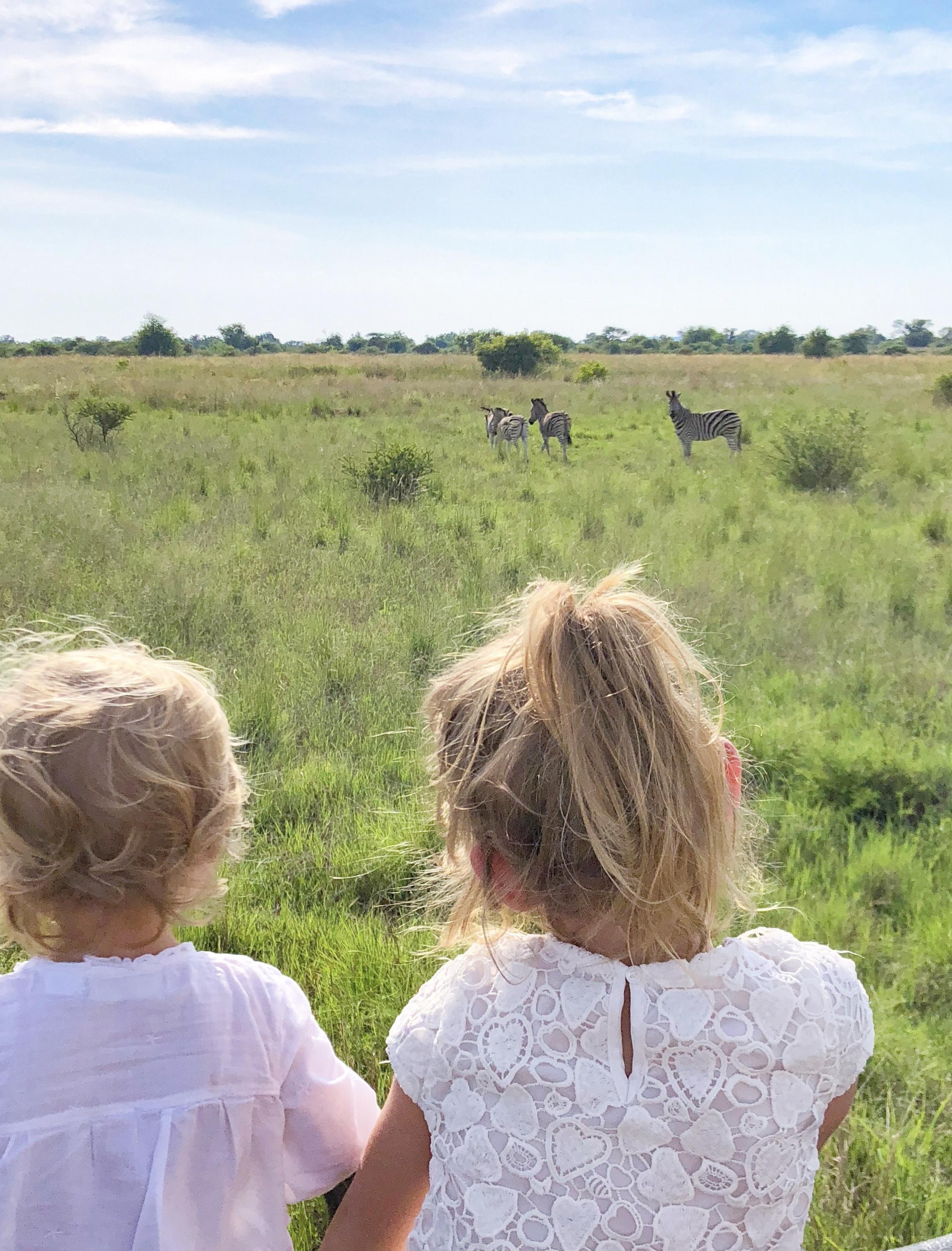 safari com crianças safari africa do sul safari quenia